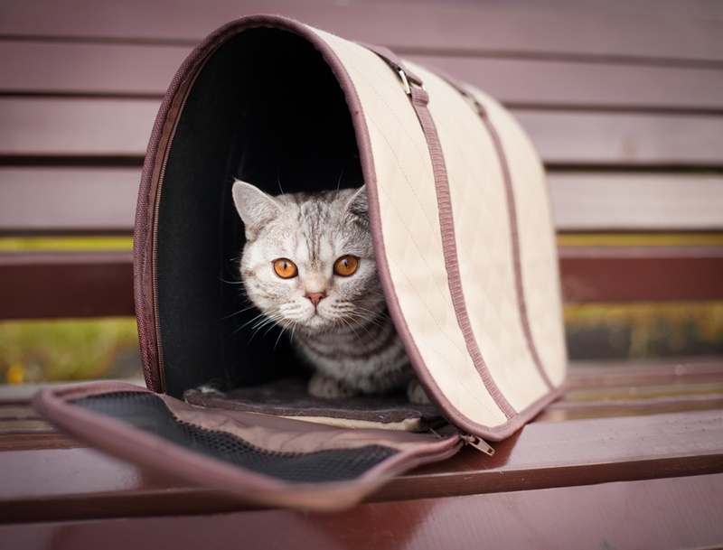 Make sure the cat feels comfortable in its carrier before going on a long trip.